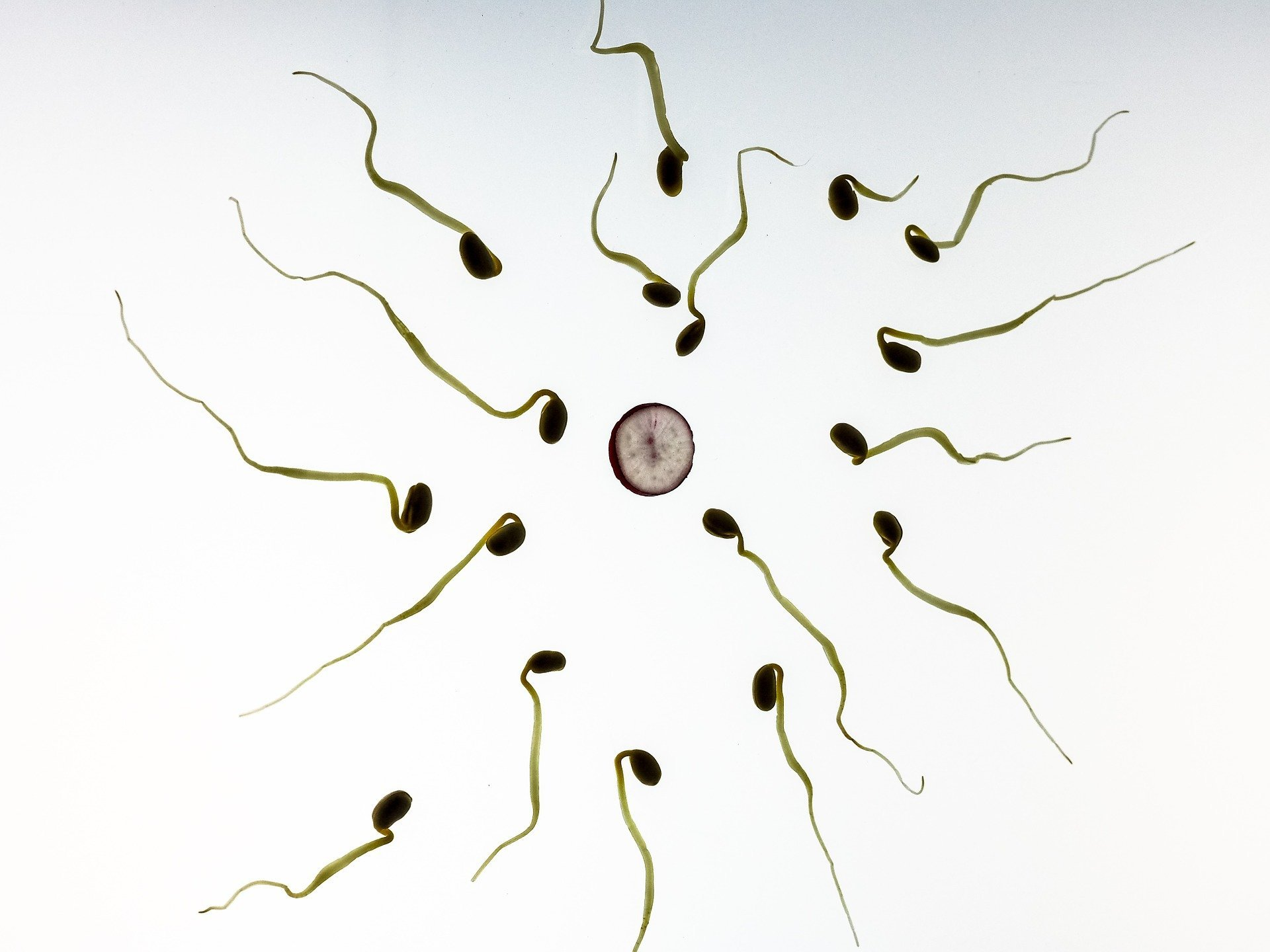 Breakthrough in understanding male infertility