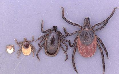 Ticks-Alarm in 2019: scientists warn of new dangerous infectious diseases