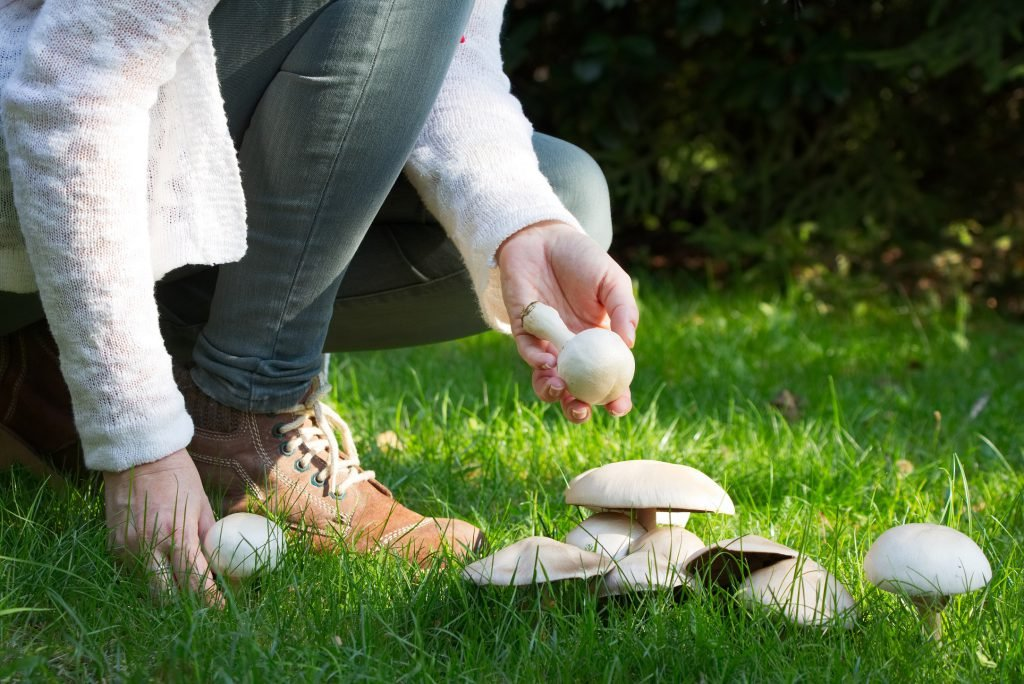 Nutrition studies: eat mushrooms that helps the memory on the jumps