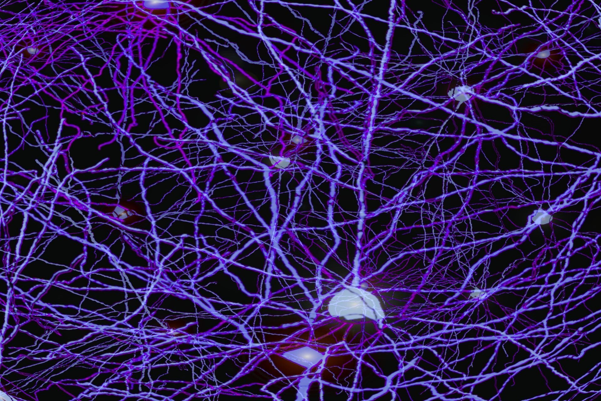 A new method to show neural representations