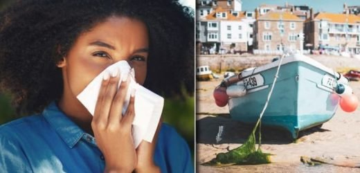 Pollen count warning: UK forecast today revealed – and how to avoid hay fever symptoms