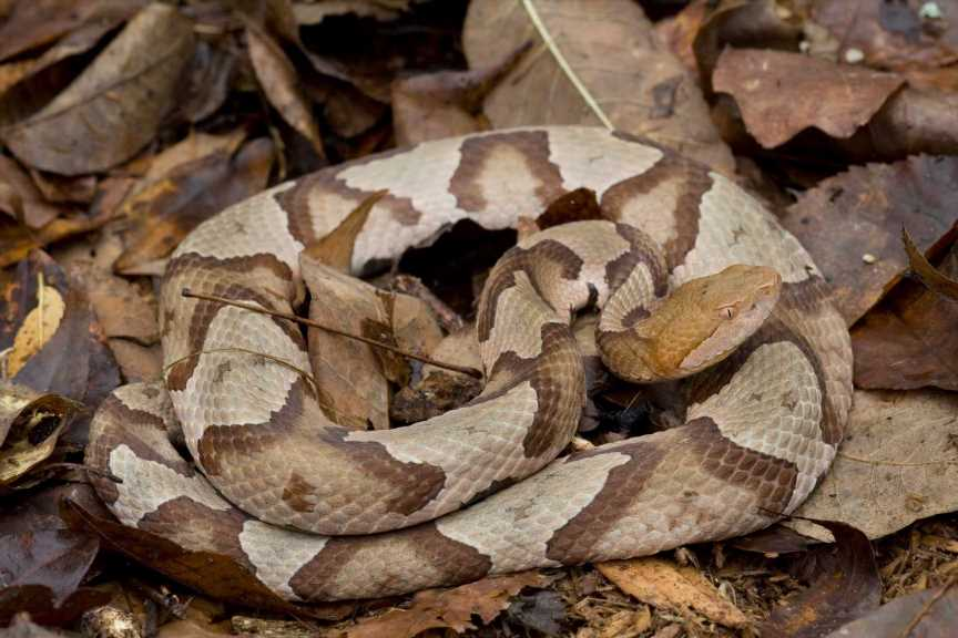 Pennsylvania woman bitten by venomous snake while doing laundry