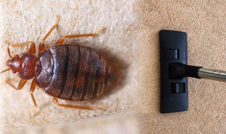 Bedbug infestation: Three tips to get rid of the critters – have you tried this?