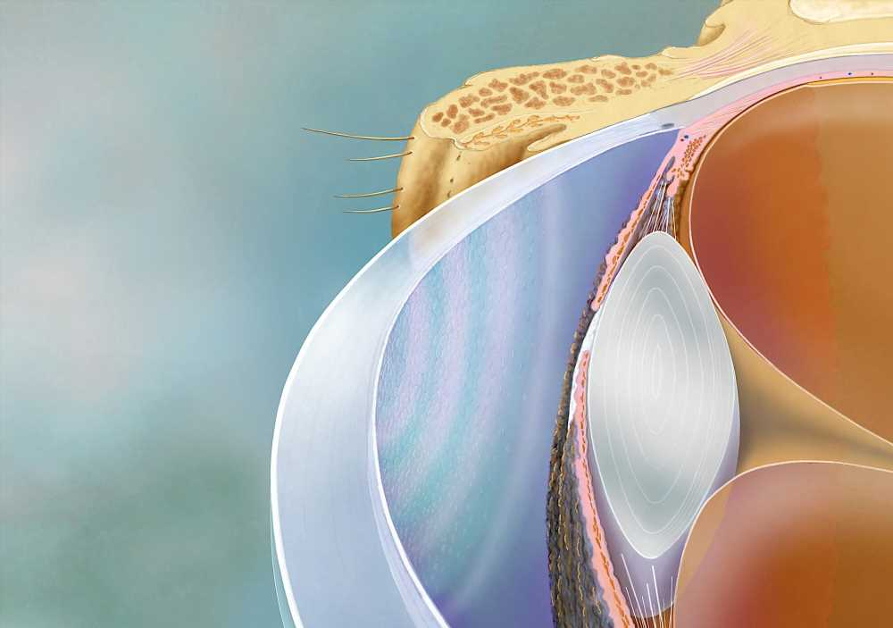 Scientists develop a physical biomarker for cornea restoration therapy
