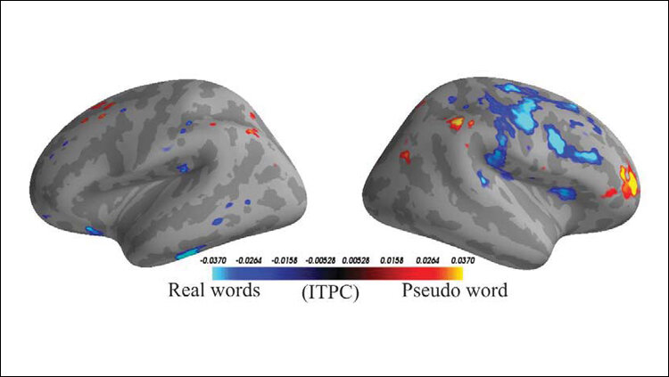 Machine learning classifies word type based on brain activity