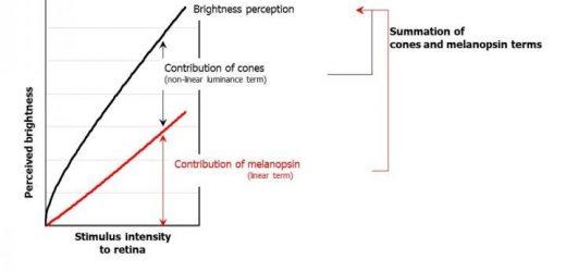 Shedding light on how the human eye perceives brightness