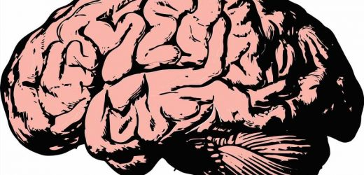 How relapse happens: Opiates reduce the brain's ability to form, maintain synapses