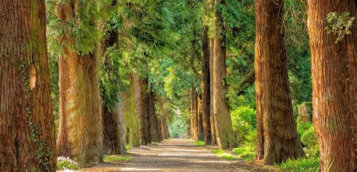 People living near green spaces are at lower risk of metabolic syndrome