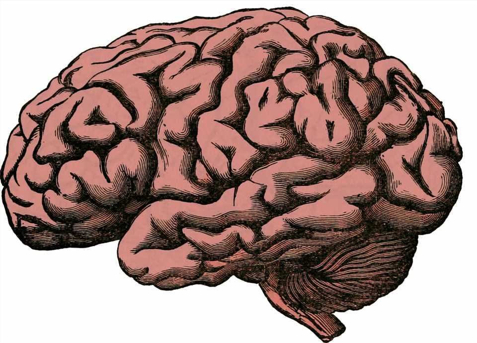 Learning motor skills requires the 'feeling' part of the brain