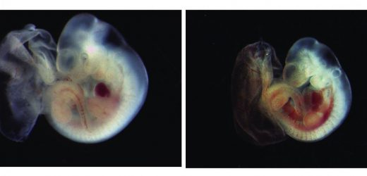 Insights into a versatile molecular death switch