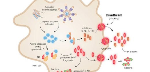 Disulfiram inhibits inflammatory gatekeeper protein—could it be helpful in COVID-19?