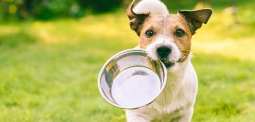 Recall due to Salmonella for this dog food – natural healing naturopathic specialist portal
