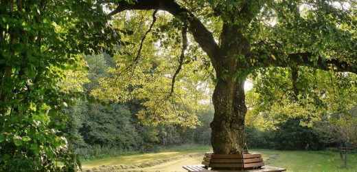 Study in Philadelphia links growth in tree canopy to decrease in human mortality
