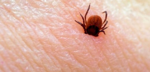 Ticks and mosquitoes: So the stitches properly care Naturopathy naturopathy specialist portal