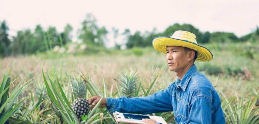 Eco-friendly paper from pineapple waste