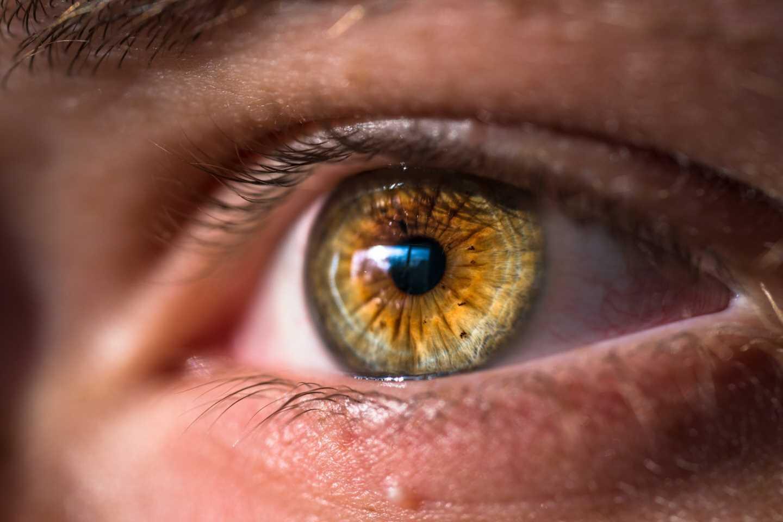 Technique to regenerate optic nerve offers hope for future glaucoma treatment