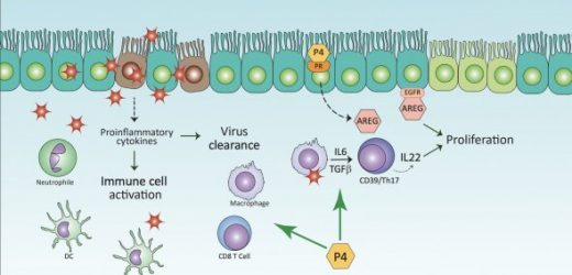 Study shows protective role sex steroids play in COVID-19
