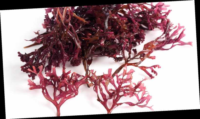 Here's What You Need To Know Before Using Sea Moss