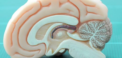 Study reveals mechanisms that cause muscle weakness in patients with Becker disease