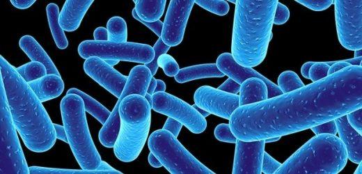 Study shows developmental trajectory of gut microbiota in cesarean-born babies