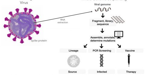 New research suggests how genomic surveillance can be an early warningsystem