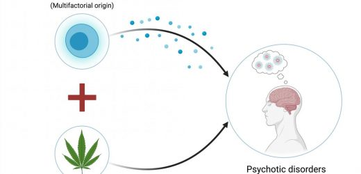 Immune system dysfunction can modify the association between cannabis use and psychosis