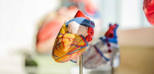 Dynamic heart model mimics hemodynamic loads, advances engineered heart tissue technology