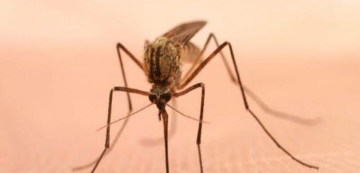1,173 cases of domestic arboviral disease reported in 2019 in United States
